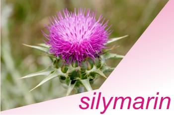 silimarina_infiammazione