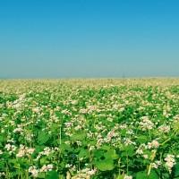 Primavera campo di fiori